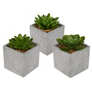 Set cactus variados